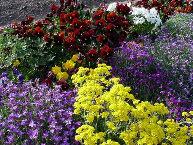 Blumen in unserem garten in unserem garten blühen die tulpen